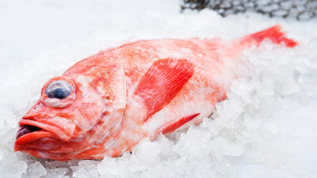 Kungsfisk (5kg)